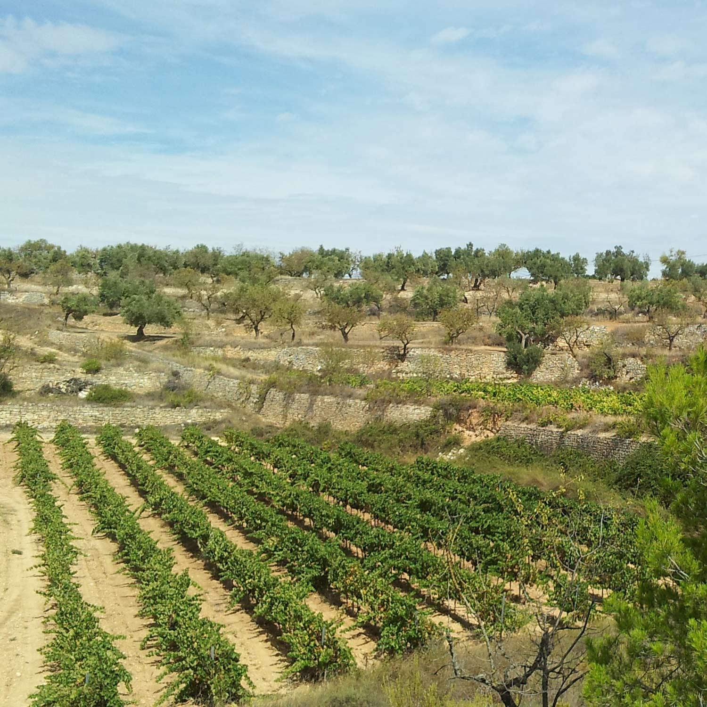 Projektet Filosofien bag projektet er, at vi gerne vil producere god vin til gavn for anpartshaverne og sælge resten på kommerciel basis, med det formål, hele tiden at forbedre vores vin og på sigt at købe mere jord.